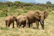Forest Protection - Kasigau Wildlife Corridor, Kenya
